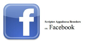 Scripter Appaloosa Breeders on Facebook